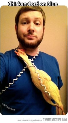 best halloween costume ever: chicken cord on blue