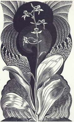 Gertrude Hermes (British, From: Irene Gosse, A Florilege: Chosen from the Old Herbals, (wood engraving) Botanical Illustration, Botanical Prints, Illustration Art, Chalk Drawings, Art Drawings, Poster Prints, Art Prints, Wood Engraving, Collage