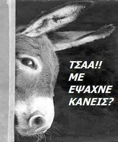 Jokes Images, Funny Images, Funny Pictures, Funny Greek Quotes, Funny Quotes, Ancient Memes, Colors And Emotions, Always Smile, One Liner