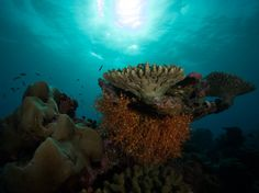 Aquaventure - Dive Sites - Addu Maldives