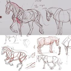 Cda demo on horses #conceptdesignacademy #animalanatomy  #demo #horse #animalart #animalsketch #animaldrawing  #jonnadon1 #jonathankuo