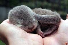 Otterly Adorable - Neatorama