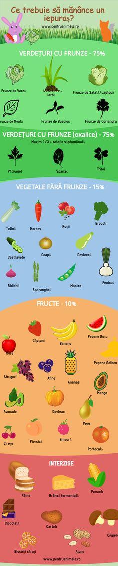 Ce trebuie să mănânce un iepuraș? Lista alimentelor permise și procentajul lor in dietă. #pentruanimale