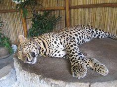 Namuang Safari Park, Ko Samui: Zobrazte recenze, články a fotografi z Namuang Safari Park na webu TripAdvisor.