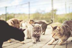 Guisantes del momento by Ibai Acevedo, via Flickr
