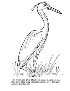 Wetland bird stencil 8 tall great blue heron cattails for Great blue heron coloring page