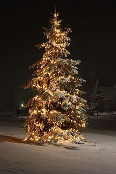 I love to see big trees lit up like this for Christmas