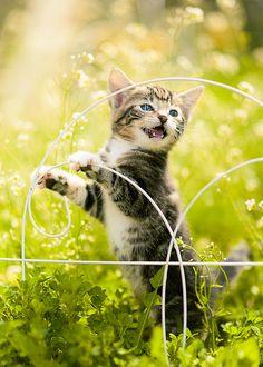 Spring Time Kitty, via Flickr.