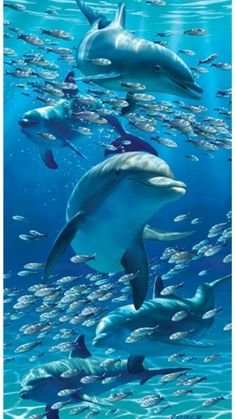 Ocean water qualities and the shades of blue - Dolphins under the Sea Beautiful Sea Creatures, Animals Beautiful, Fauna Marina, Underwater Life, Underwater Animals, Ocean Creatures, Tier Fotos, Sea And Ocean, Sea World