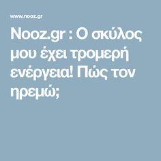 Nooz.gr : Ο σκύλος μου έχει τρομερή ενέργεια! Πώς τον ηρεμώ;
