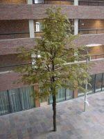 Esdoorn kunstboom 10 meter hoog
