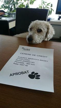 Cerere de credit ;)