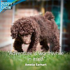 """""""Adventure is worthwhile in itself."""" Amelia Earhart"""