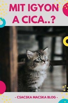 Macska | Macska képek | Macskák és kiscicák | Macskák vicces | Macskák cuki | Macska ivás | Cicák | Cicák cuki | Cicák vicces | Cica ivás | Macskás idézetek | Macskás képek | Cicás képek | Macska itatás | Cica itatás | Macska idézetek | Macska idézet | Macska itató | Idézetek macska | Macskás idézetek | Cica idézet | Cica idezetek | Cicás idézetek magyarul | Kismacska | Cuki kismacskák | Kiscica | Kiscicák | Kiscicás képek | Kiscica sweets | Kiscicás képek | Macskatartás | Cicatartás Animals, Animais, Animales, Animaux, Animal Books, Animal