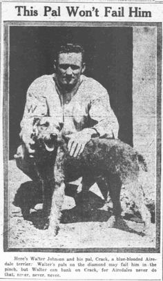 This Airedale Pal Won't Fail Him Walter Johnson and his pal Crack, the blue blooded Airedale Terrier. The Washington Times August 09, 1919