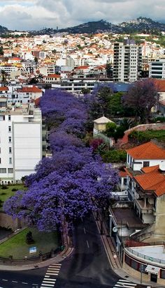 Funchal, Madeira Island - the Island of flowers #Portugal #PortugalFlowerPower