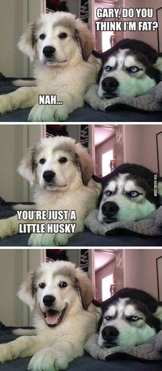 Pun puppy - 9GAG