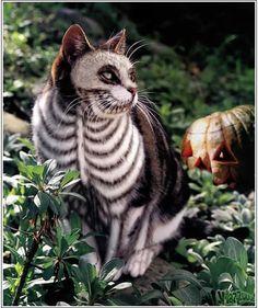 painted cat (maquiagem de gatos)