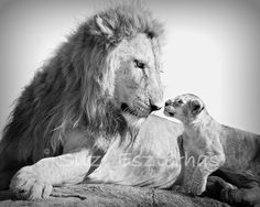 SAFARI BABY ANIMAL Photography, Set of 4 Black and White Photos, Elephant, Lion, Cheetah, Giraffe, Animal Photography, Baby Shower, African by BabyAnimalPrints on Etsy https://www.etsy.com/listing/103817214/safari-baby-animal-photography-set-of-4