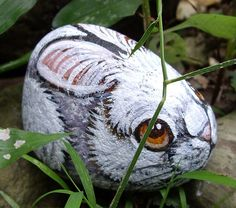 Rabbit | by Borneo Rocks!