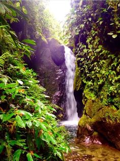 Mindo, Ecuador – The Cloud Forest In #Ecuador there is much more to do and see here than the famous #Galapagos Islands. From the #Amazon Rainforest to beautiful #beaches, #mountains, and #cloud forests, Ecuador has all the #outdoor activities you could imagine! #Mindo, the cloud forest just outside of #Quito, is a very #peaceful, #relaxing place. Night Walking Tour for $12 USD! #travel #traveltip #southamerica #wanderlust