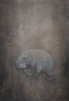 """Manatee: Sea Cow - Artist Winkstink (18""""x24"""") #drawing #charcoal #pencil #watercolor #ColoredPencil #art #floating"""