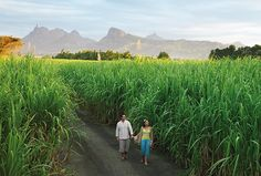 Get a taste of Mauritius' sweet history during a tour of an old sugar mill, where you'll explore the factory and the surrounding sugar cane fields.