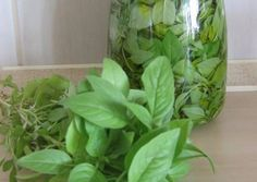 Great recipe for Fresh basil throughout the winter. How to have fresh basil throughout the winter! Fresh Basil, Fresh Herbs, The Kitchen Food Network, Cooking Tips, Cooking Recipes, Kitchen Herbs, Greek Cooking, Greek Recipes, Different Recipes