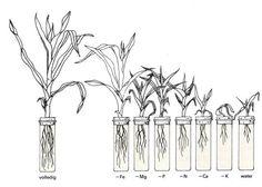 Er is goed te zien hoe een plant zich ontwikkeld