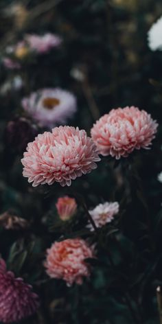 Dark Flowers, Flowers Nature, Beautiful Flowers, Colorful Wallpaper, Nature Wallpaper, Flower Backgrounds, Wallpaper Backgrounds, Aesthetic Iphone Wallpaper, Aesthetic Wallpapers
