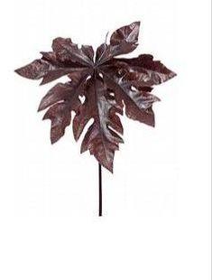 Paw leaf branch