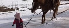 A Sweet Little Girl Takes A Gentle Horse For A Walk In The Snow And It's Absolutely Precious