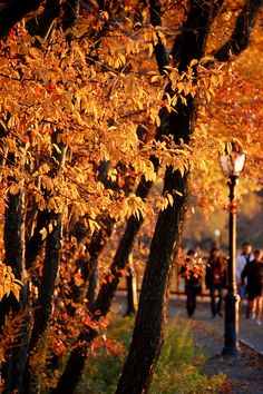 Fall colors, Central Park, New York