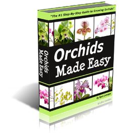 Orchids Made Easy: All About Orchid Care!