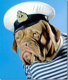 Funny sailor dog smoking http://funnyblaster.com/dogs/funny-sailor-dog-smoking.html