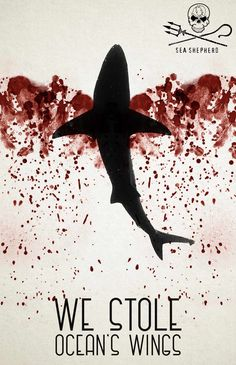 Sea Shepherd: Ocean's wings, 3 Dylan was here. Save The Sharks, Sea Shepherd, Save Our Oceans, Marine Conservation, Stop Animal Cruelty, Creative Advertising, Sea World, Endangered Species, Of Wallpaper