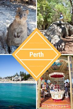 Visit Perth with the family and discover stunning beaches, pieces of Australia's maritime and penal history, along with and a cosmopolitan city centre. There are plenty to of things to do in Perth with kids! Australia Travel Guide, Perth Australia, Western Australia, Travel With Kids, Us Travel, Family Travel, Travel Tips, Travel Guides, Travel Destinations