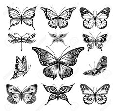 Buy Butterflies Graphic Illustration by Azzzzya on GraphicRiver. Illustrations of tatto style butterflies Butterfly Illustration, Butterfly Drawing, Butterfly Tattoo Designs, Graphic Illustration, Illustrations, Insect Tattoo, Symbol Tattoos, Cute Tattoos, Flower Tattoos