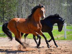 www.TRISTANA.ru: Детали снимка