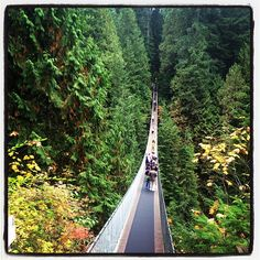 Capilano Suspension Bridge in Vancouver, BC  http://www.capbridge.com   A $35 ticket, but very cool. Go to the other suspension bridge at Lynn Canyon which is still cool but free.