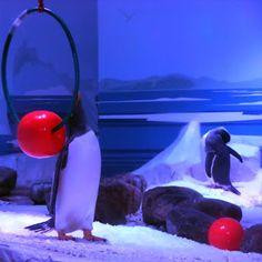 Penguins, London Aquarium  http://www.amuminlondon.com/2013/10/jellyfish-sharks-london-aquarium.html (LW19-4)