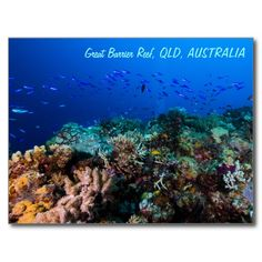 A cool postcard that features abundant schools of tropical fish swimming over an amazing variety of soft and hard corals on Australia's Great Barrier Reef. #coral #reef #ocean #sea #diver #tropicalfish #greatbarrierreef #coralsea #coralreef #nature