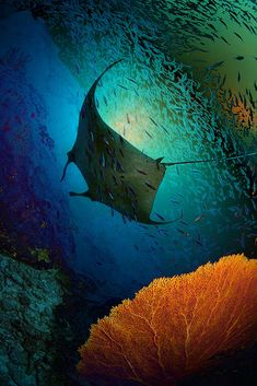 faustinepau:Manta Dreams, Krabi, Thailand