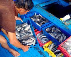 Hà Tĩnh phổ biến 154 loại hải sản chưa an toàn cho ngư dân   Nhà chức trách lên phương án dán danh sách các loại hải sản tầng đáy ở 4 tỉnh miền Trung được khuyến cáo chưa an toàn tại các bến cá chợ đầu mối hải sản cũng như khu vực thường xuyên khai thác đánh bắt để người dân biết.  Theo đó khuyến cáo của Bộ Y Tế về những hải sản chưa đảm bảo an toàn để sử dụng làm thực phẩm như ghẹ tôm tôm tít ốc mực cá đuối cá đục bạch tuộc cua đá và các hải sản khác sống ở tầng đáy trong vòng 135 hải lý…
