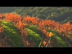 Along with being named the happiest place in California (and one of the happiest nationally) Sonoma County was voted #1 Wine Destination in ...