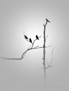 Black and White photography / nature, minimal, minimalist, BIRDS in GREY FLANNEL_ 8 x 10 print - NicholasBellPhoto