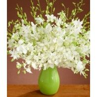 Orchid flowers, including phalaenopsis, dendrobium and other exotic flowers, make for an elegant flower delivery every time. Send orchids as a showstopper. Types Of White Flowers, White Wedding Flowers, White Dendrobium Orchids, White Flower Arrangements, How To Feel Beautiful, Absolutely Gorgeous, Houseplants, Exotic, Succulents