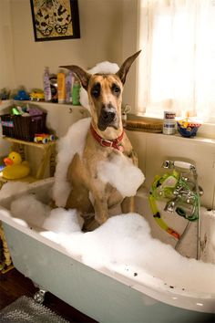 Great Dane....love this tub...(oh, the dog, too!)  LOL