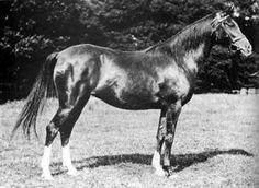 Arabian mare Nasra (b. 1908)