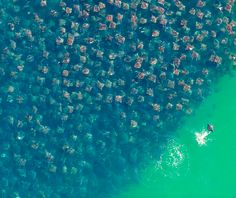 sting rays....holy crap! Would not want to be in that water